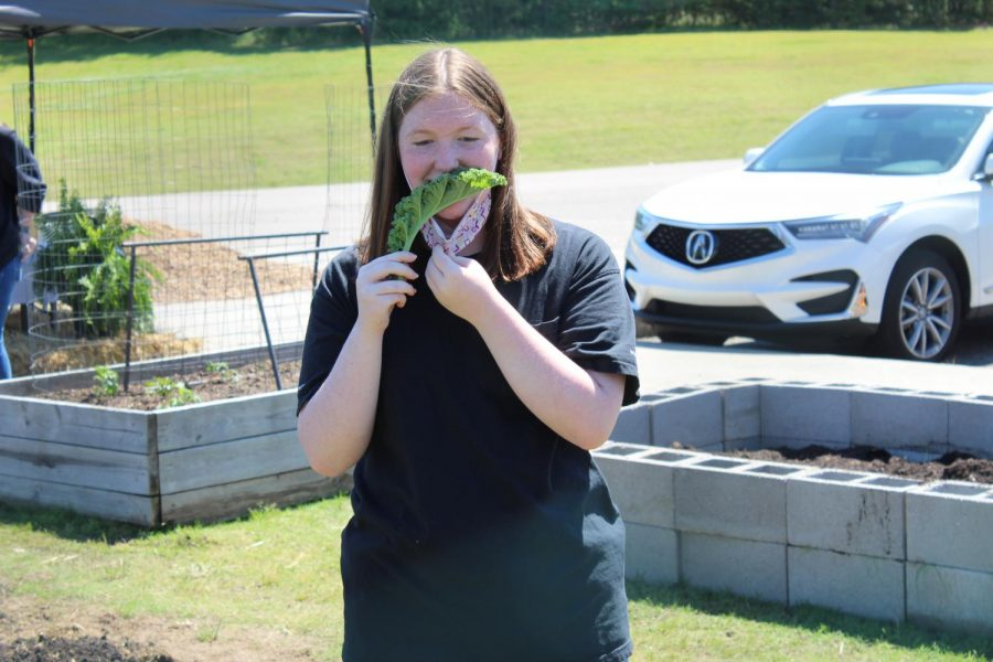 """Freshman Mylee Castille munches on farm fresh kale while visiting the CHHS Farm May 6. """"When we make food in the classroom, we usually use the chicken or duck eggs,"""" the Resource Management student said. """"We get to come out here and help on sunny days."""